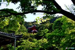 青紅葉と医聖堂~今熊野観音寺