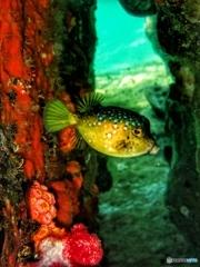 柏島の魚達#3ギョギョギョ