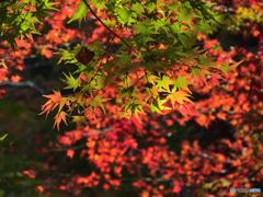 清滝で紅葉狩り