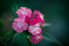 Colorful flowers5