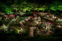 古河庭園にて 2