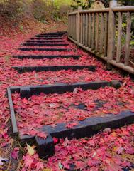 落葉の階段