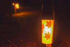 紅葉を照らす…