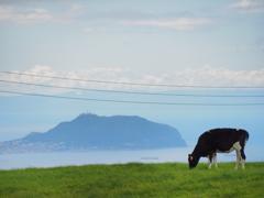 函館山と牛