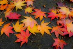 カラフル落葉