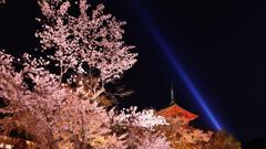 清水寺1 夜桜