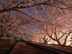 蹴上インクライン 夜桜