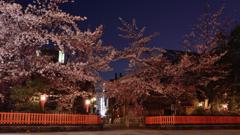 祇園白川、巽橋に咲く夜桜