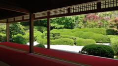 大池寺3 京都に負けへんで