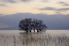 琵琶湖夕景2
