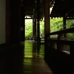永観堂5 床緑を探して