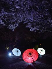 夜桜撮影会
