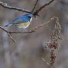 撮り(鳥)初め-1