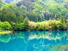新緑の四万湖