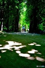 心地よい緑のトンネル