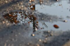 雨上がりの秋。