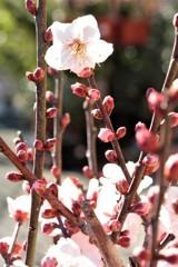 春が突っ走る