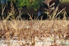 秋の地熱は