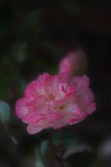 ピンクの愁い