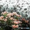 地下の滝を、花とともに眺めて。