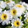白い花 頑張れ