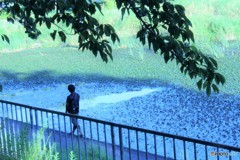 足音に 水面を覆う浮草が割れ・・・・・