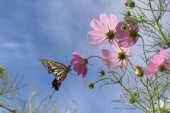 蝶の遊び相手がいない