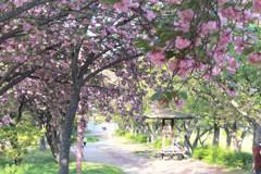 春から夏へ
