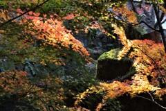 散ったら緑の岩が受け止める