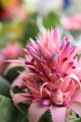 トゲトゲの花らしき存在 (エクメア)
