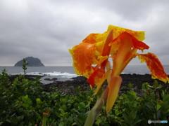 荒れる海よ さあどんとこい (カンナ 済州島にて 1)