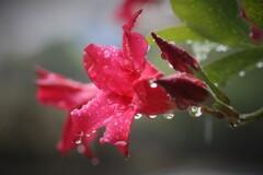 一雨ごとに冷たく