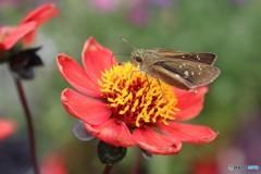赤い花の蜜