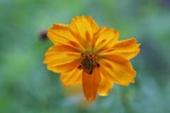 漂う黄の花