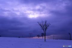 名古屋の雪原