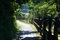 P1280234 夏の朝の散歩道
