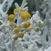 P1270414 雪中の花