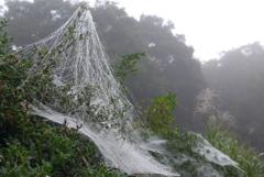 P1180760 クモの糸