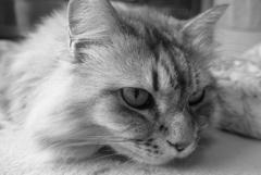 P1130742 猫の日