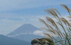 P1250142 10月16日 富士山とススキ