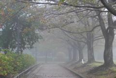P1180777 霧の公園