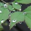 P1230515 水滴