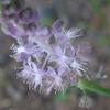 P1180065 野の花