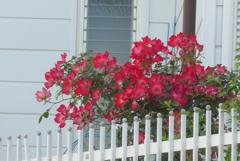 P1270336 赤いバラが似合う家