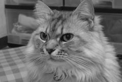 P1130748 (2) 猫の日