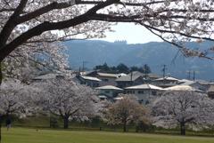 P1210544 桜は咲く…