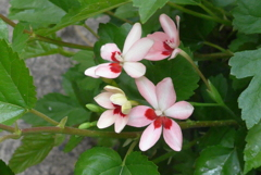 P1080630 かわいい花