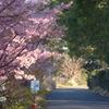 P1200476 桜の散歩道
