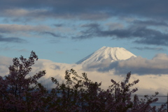 P1200581 2月28日 今朝の富士山