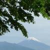 P1080998 緑と富士山